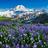 3002_1103840550_avatar