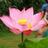 5001_92696261_avatar