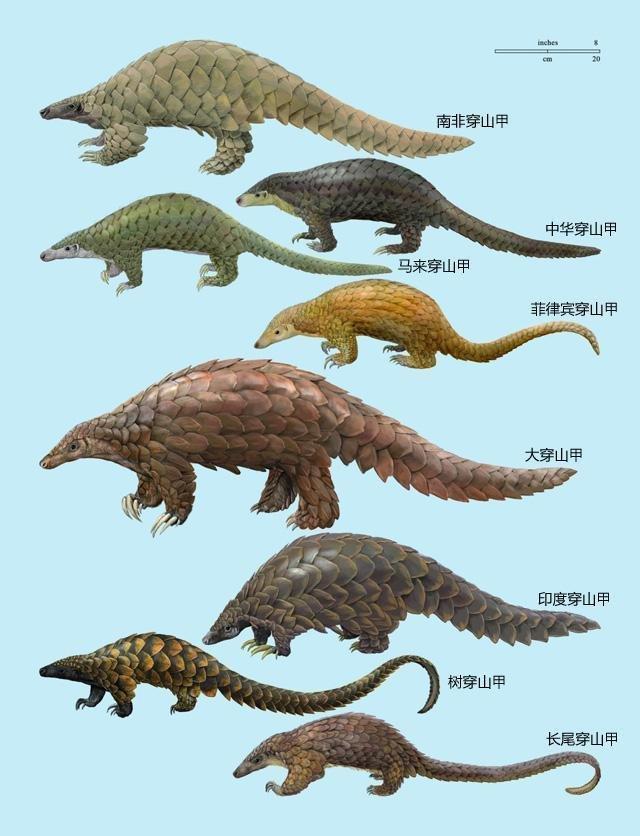 动物 恐龙 640_836 竖版 竖屏