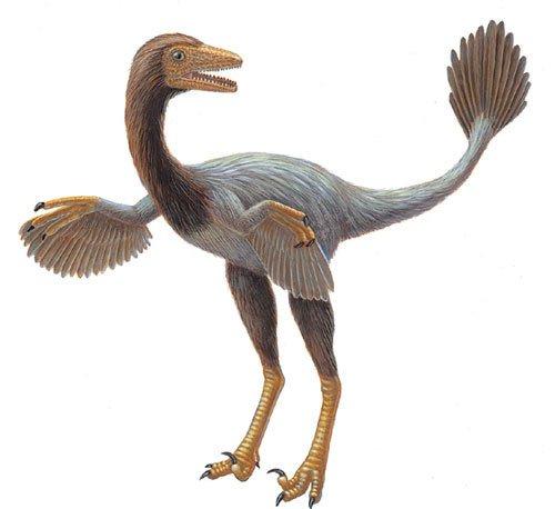 有羽���9�d:o�yc%��_其中后两者的细丝状皮肤衍生物已经出现了鸟类羽毛独有的分叉结构