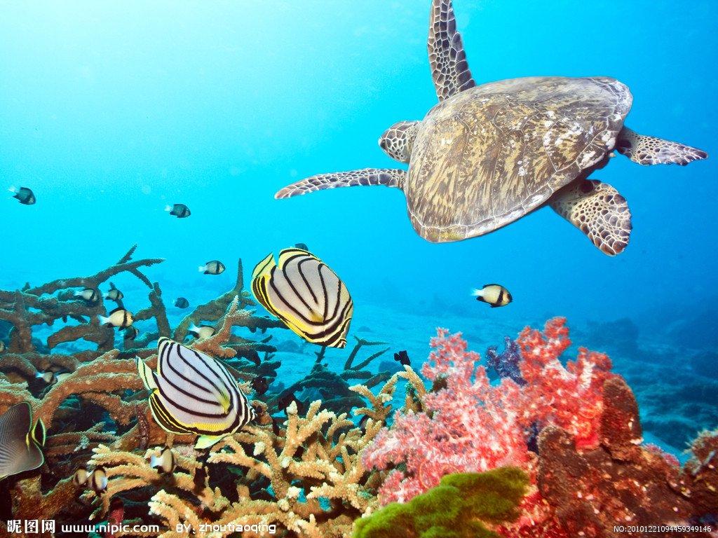 教材课文 人教版三年级语文下《海底世界》课文 海底世界你可知道,大