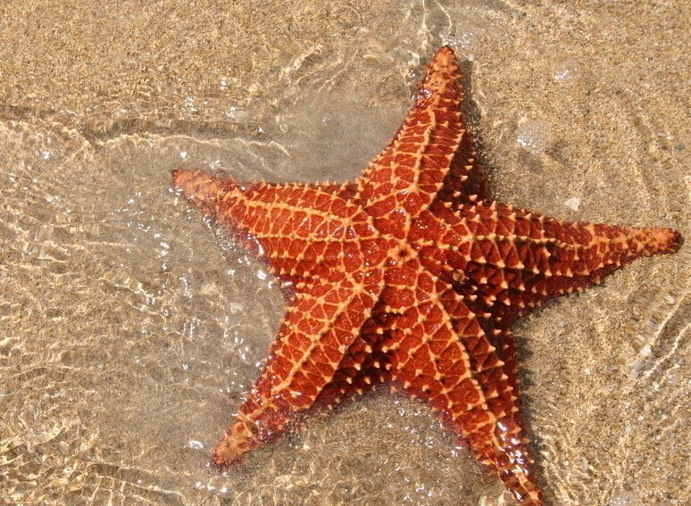 初中海洋海星蜡笔画图片大全