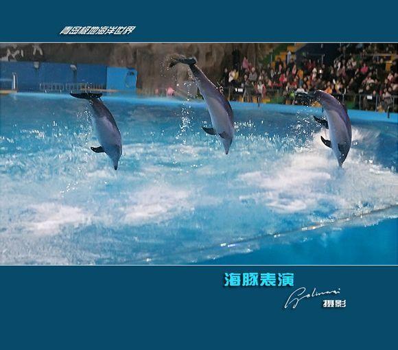 青岛极地海洋世界门票