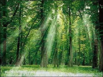 """亚马逊热带雨林,世界最大的森林,森林茂密,动植物种类繁多,有""""世界动"""