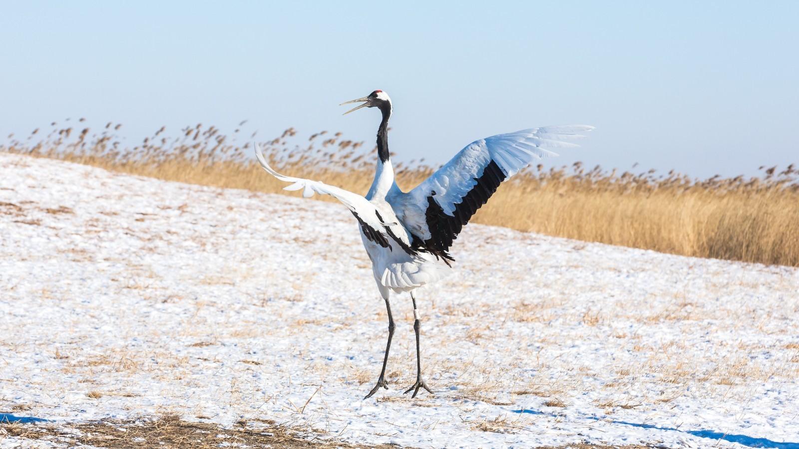 齐齐哈尔冬天风景
