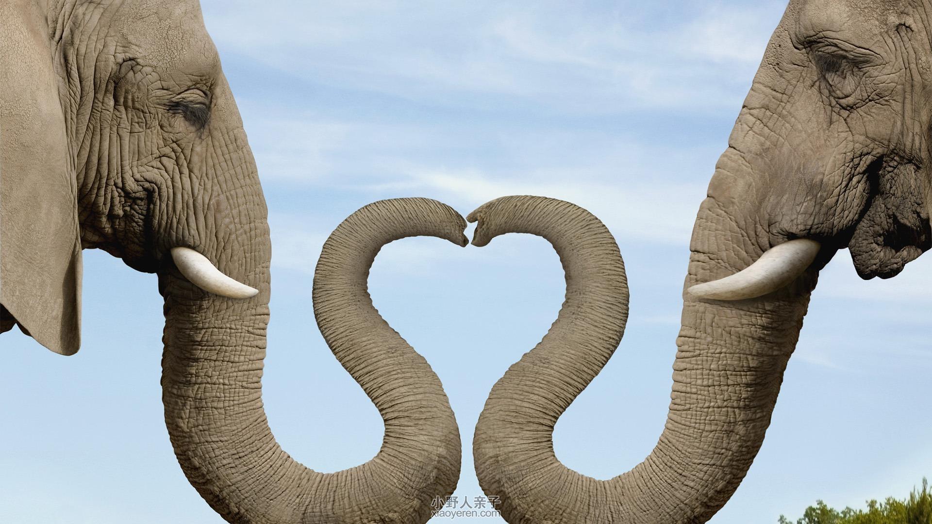 壁纸 大象 动物 1920_1080