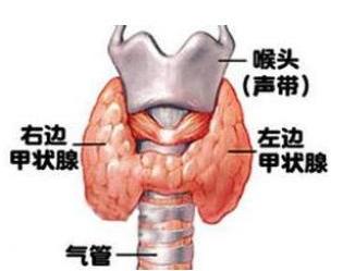 甲状腺功能亢进