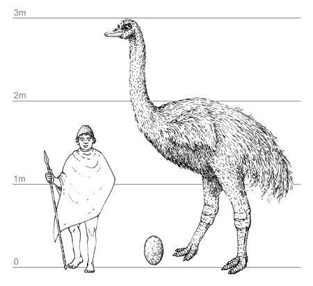 象鸟_史前最大的动物第一名_史前最凶猛的十大动物